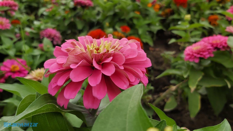 نمونه عکس دوربین گوشی گلکسی A70 سامسونگ