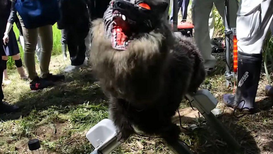 ربات گرگ نمای ژاپنی – برنده جنگ خرس و انسان